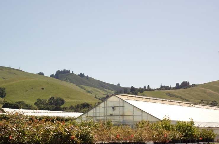 San Francisco & Driscoll's Berries Farm | sophisticatedgourmet.com